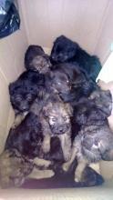 11 kiskutya